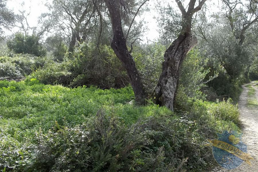 Land For Sale - KOUSPADES, CORFU